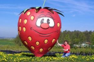 Mit ca. 4,20 Metern Höhe ist diese Großformatplastik für einen Streuobst-Betrieb die größte Erdbeere der Region.